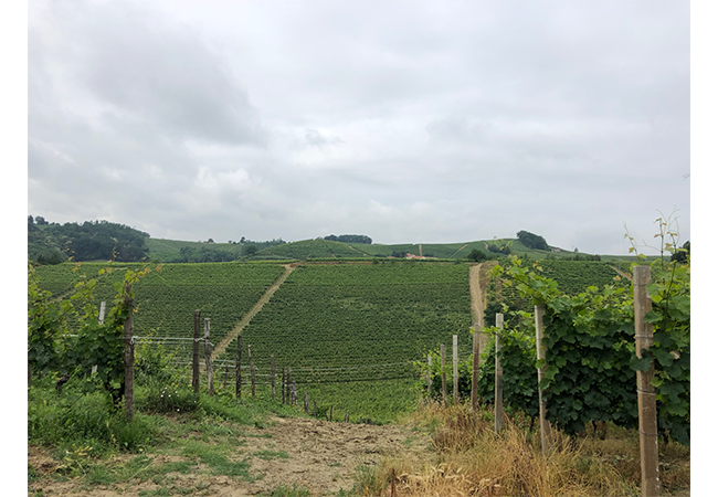 brachetto d'acqui docg acqui docg rose spumante dolce italiano colline alto monferrato piemonte